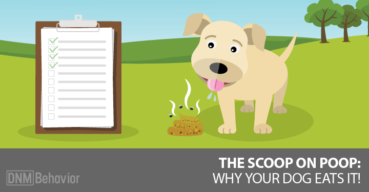16 Reasons Dogs Eat Poop and What To Do About It