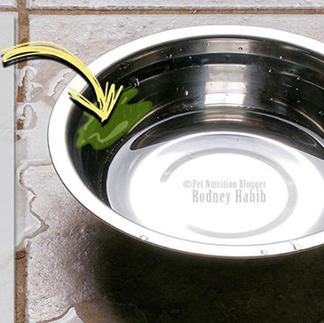 Slime In Dog Water Bowl