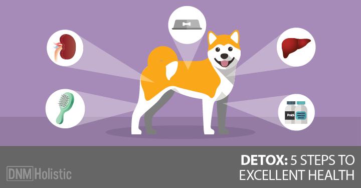 Detoxing your dog
