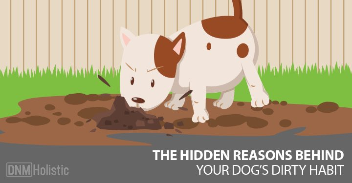 5 Reasons Dogs Eat Dirt - Dogs Naturally