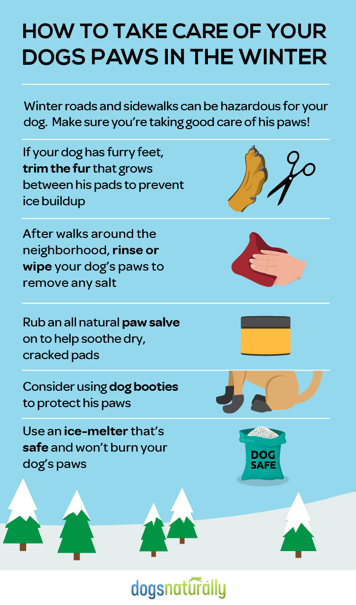 15 Winter Care Tips for Dogs