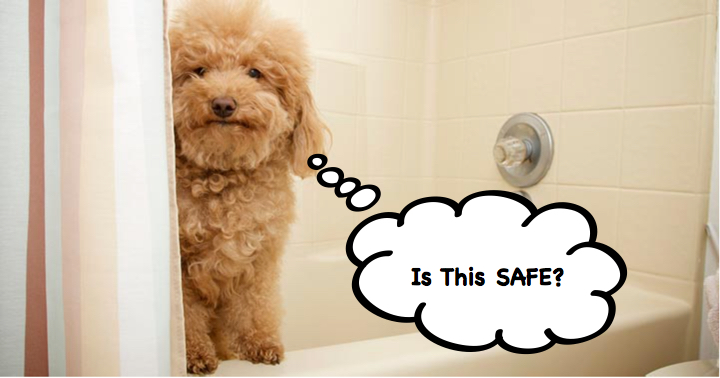 dog shampoo safe