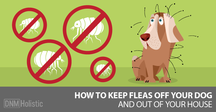 [Updated] Our Best Home Remedies For Fleas