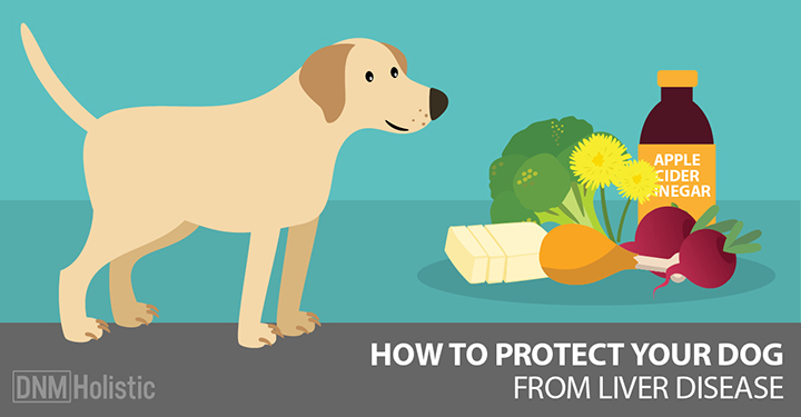 Low Protein Dog Food For Liver Shunt