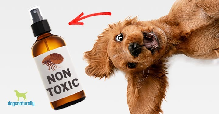 a dog excited to see a non toxic spray bottle of flea prevention