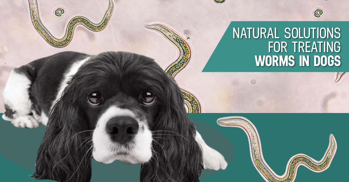 Updated Preventing And Treating Worms In Dogs
