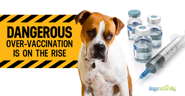 Dog next to vaccines and warning sign of over vaccination