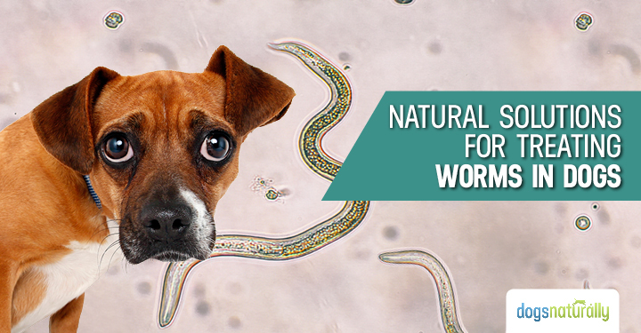 Treating Dogs For Worms Naturally