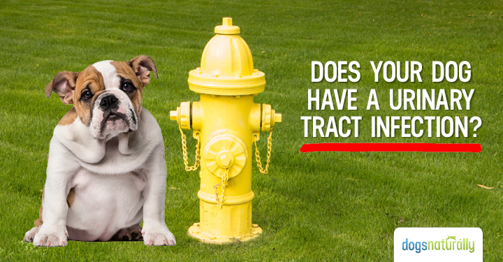 3 Early Signs Your Dog May Have A UTI