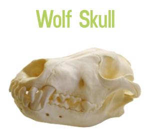 wolf-skull-DNM