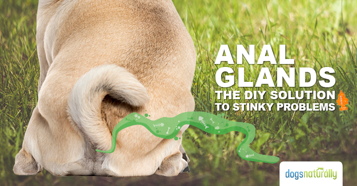 How to clean a dogs anal glands