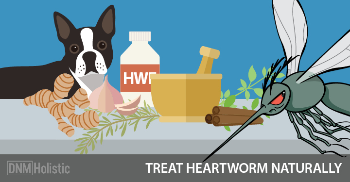natural heartworm treatment