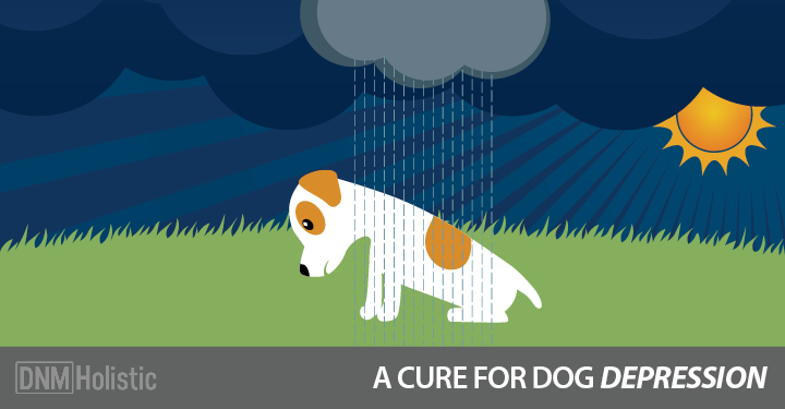 A Cure For Dog Depression