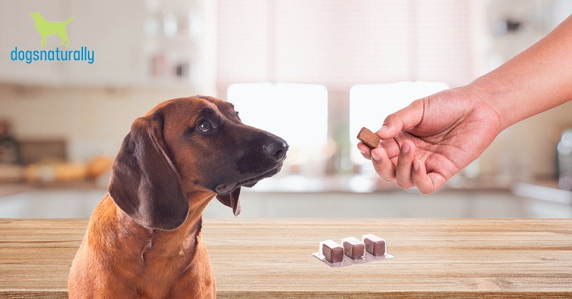 Are Flea and Tick Drugs Safe?
