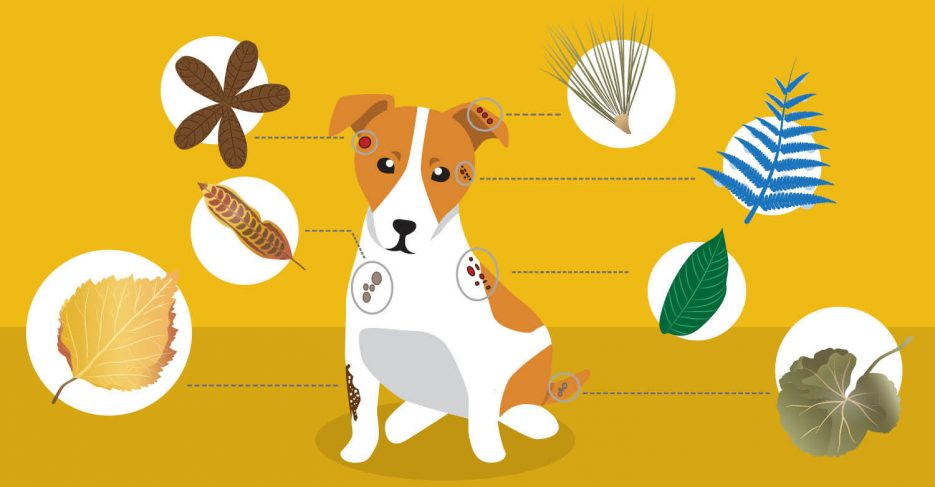 8 Herbs For Common Dog Skin Problems