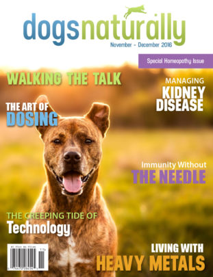 Dogs Naturally Magazine - Making Dogs Healthy Again
