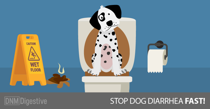 Stop Vomiting In Dogs Naturally
