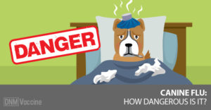 Dog with canine flu in bed with a Danger sign