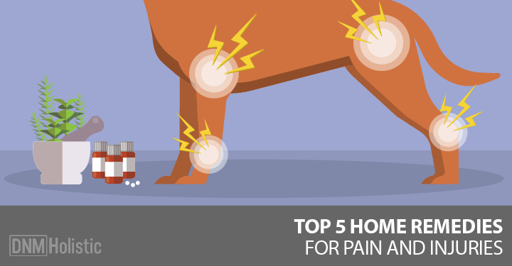 remedies for dog joint pain