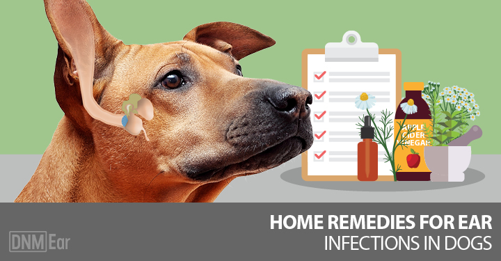 Natural Remedy For Dog Ear Infection