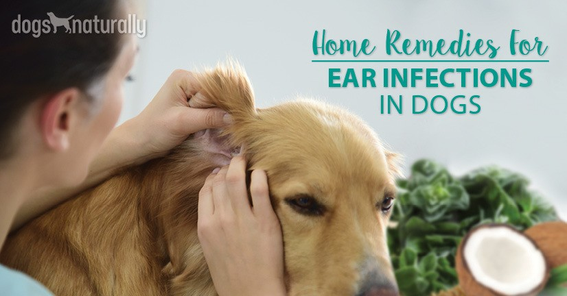 Our Top 5 Natural Remedies For Dog Ear Infections