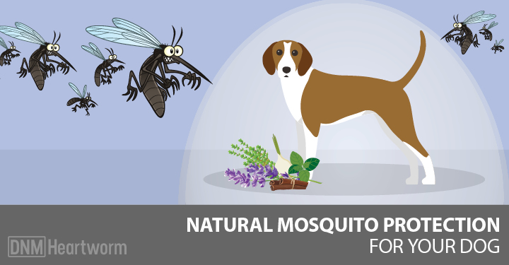 The Top Natural Mosquito Repellents For Dogs