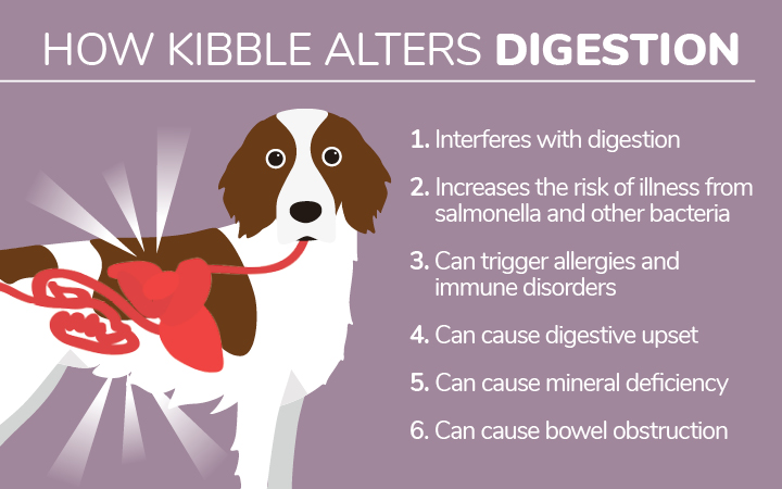 How kibble alters digestion in dogs