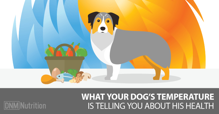 holistic health for dogs