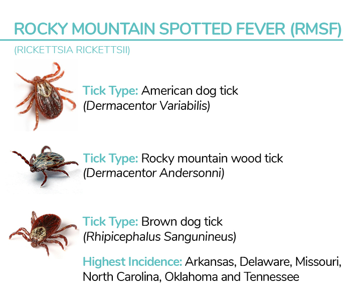 How To Remove Ticks From Your Dog: Dos And Don'ts