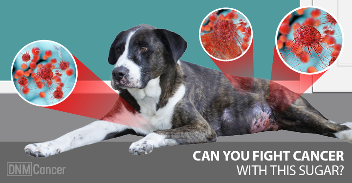 How This Special Fiber Fights Cancer In Dogs