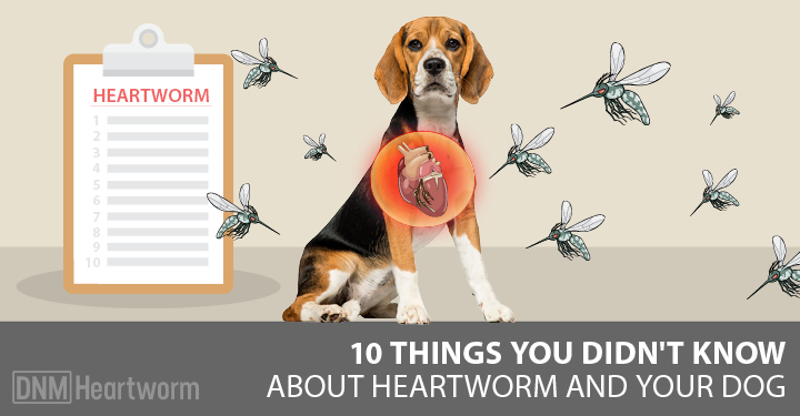 10 things you didn 39 t know about heartworm dogs naturally