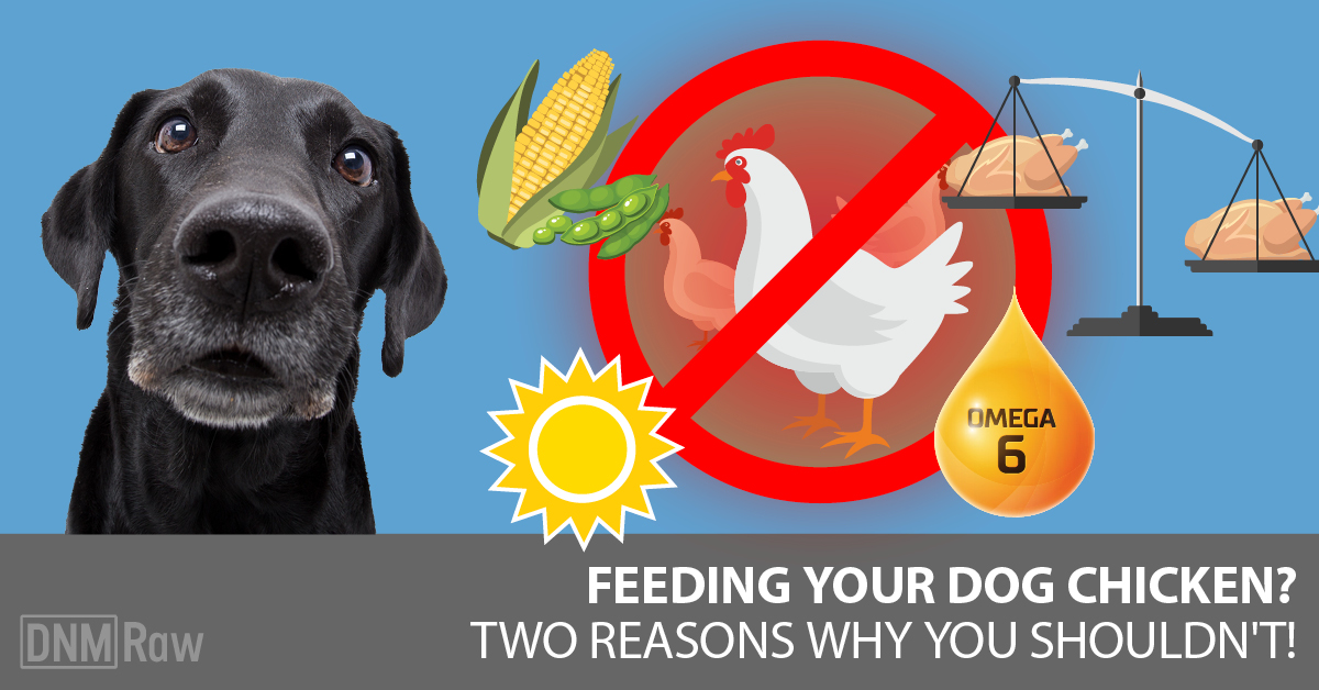 Raw Chicken For Dogs Why I Stopped Feeding It Dogs