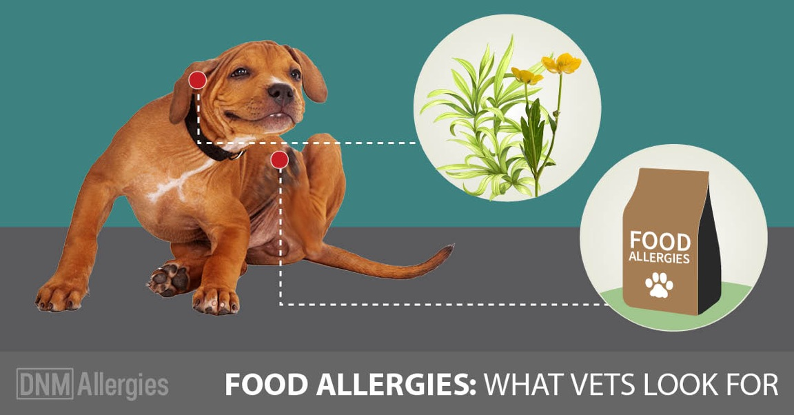 Stop Allergies In Dogs Naturally