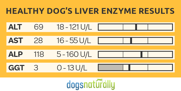 Table with healthy dog's Liver Enzyme Results