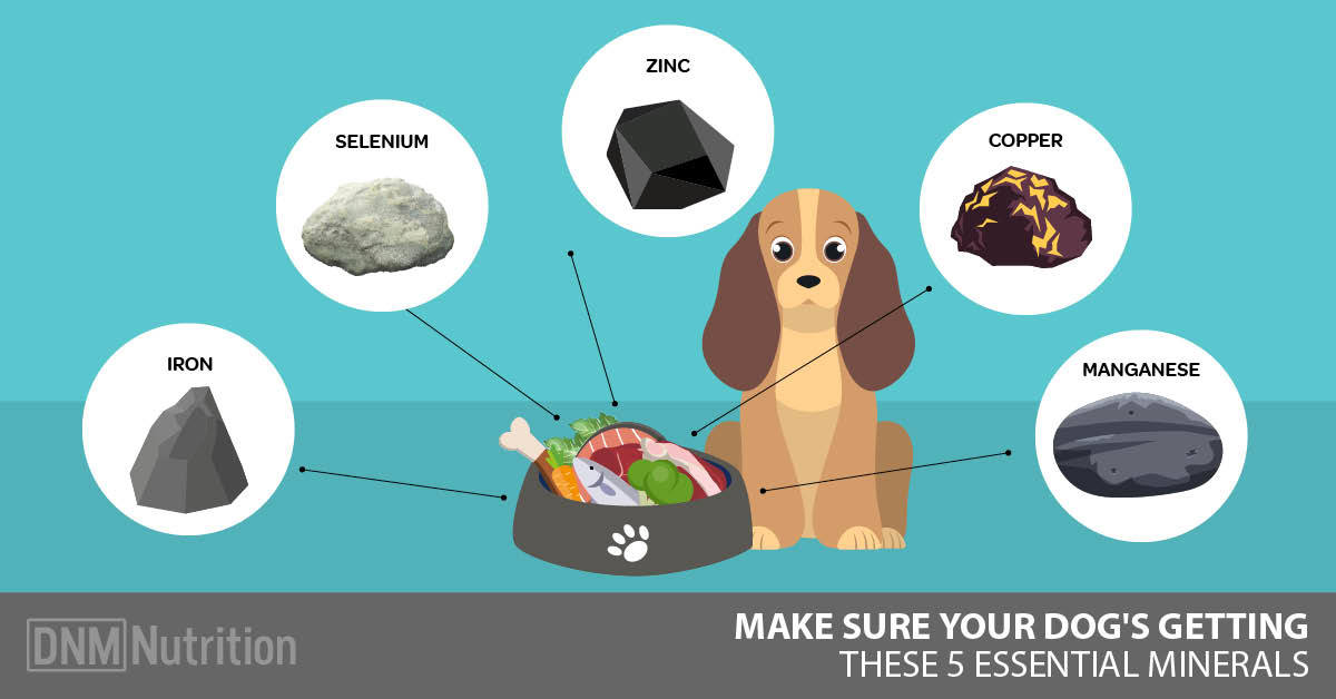 The 5 Trace Minerals Your Dog Needs In His Diet