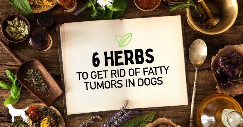 6 herbs to get rid of fatty tumors in dogs