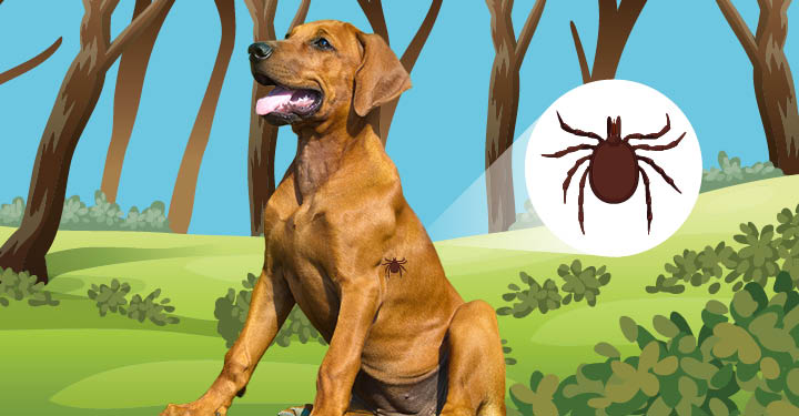 Natural Treatment For Lyme Disease In Dogs