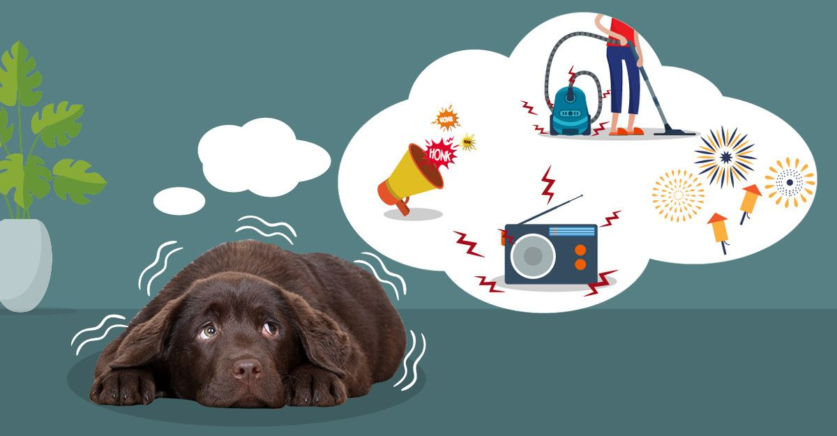 6 Natural Solutions For Dog Anxiety