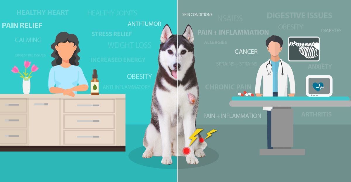 CBD For Dogs: How It Can Help These 5 Common Conditions