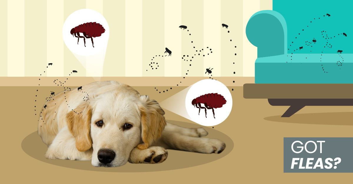 How To Get Rid Of Fleas Naturally On Your Dog At Home In Your Yard