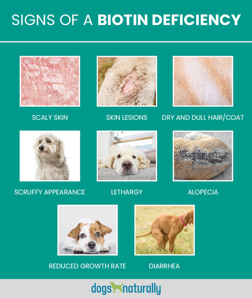 Signs of a biotin deficiency in dogs