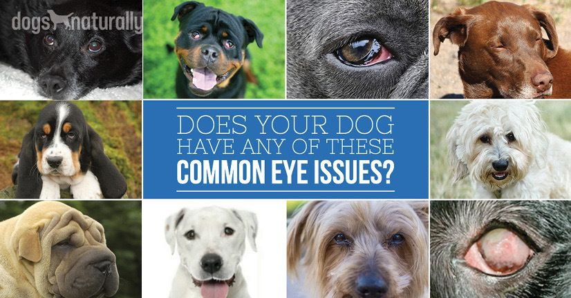 Yes - You Can Manage Dog Eye Problems Naturally!