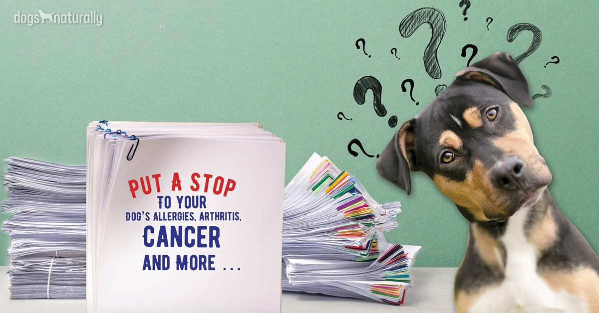 Dog with questions on how to manage chronic inflammation