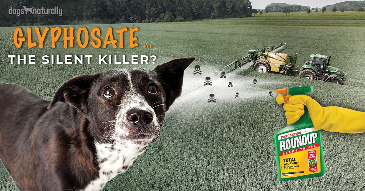 Is Roundup Safe For Dogs?