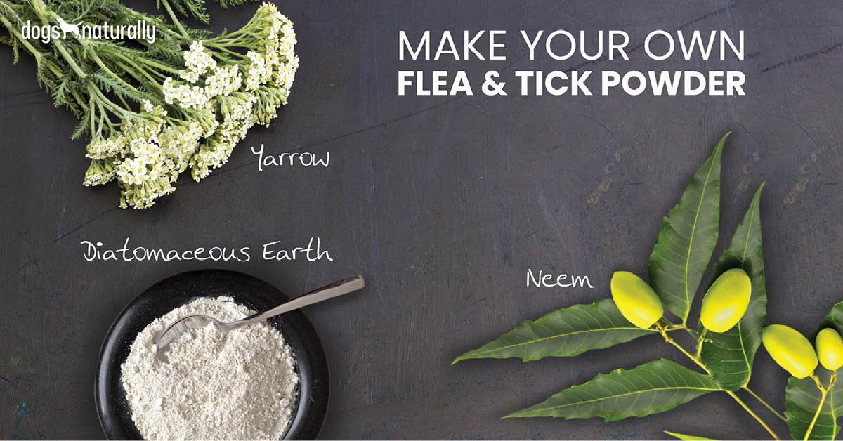 Make Your Own Flea And Tick Powder - Dogs Naturally