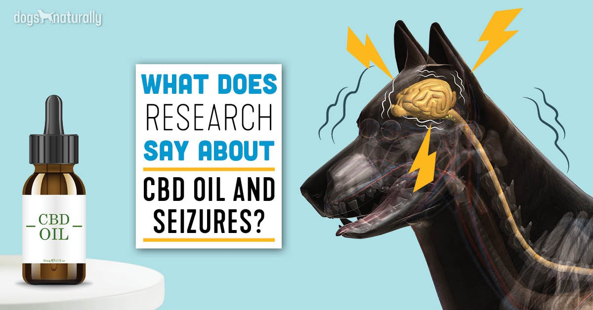 CBD Oil For Seizures In Dogs