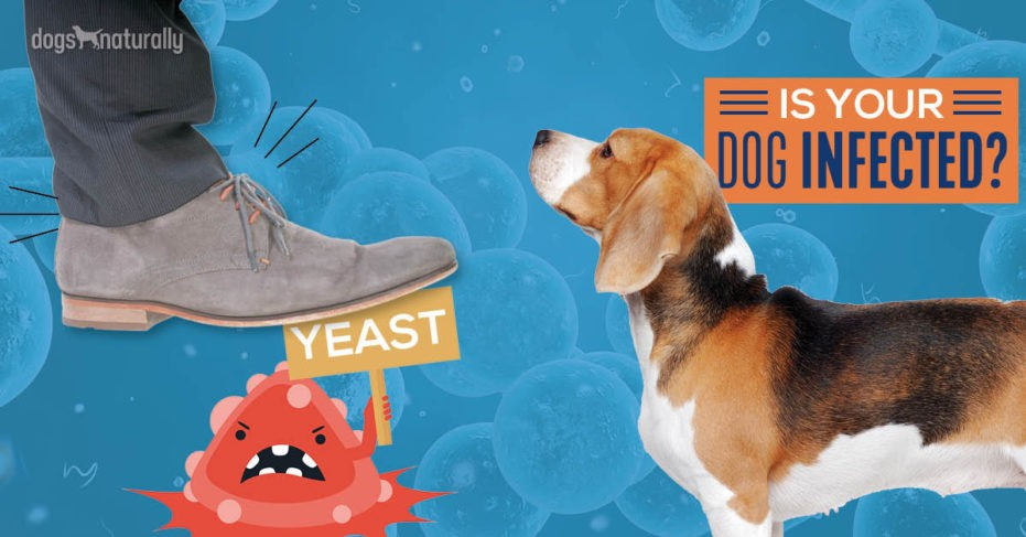 Dog looking at person stepping on yeast infecton