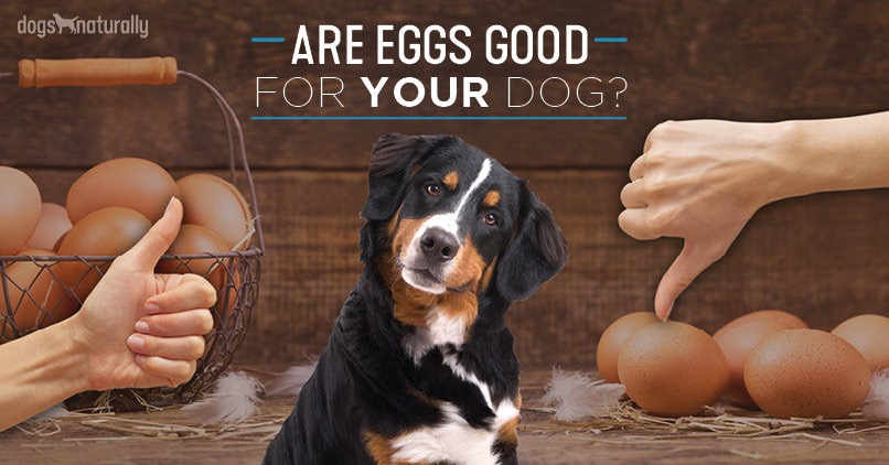 are eggs good for dogs