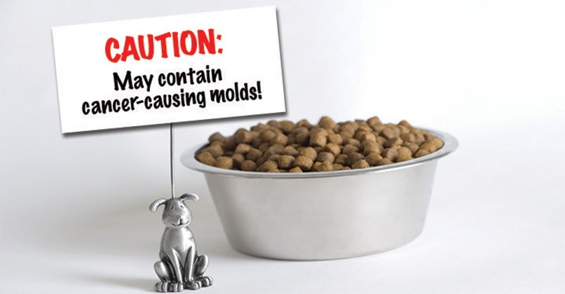 Cancer Causing Aflatoxins Found In Dog Foods