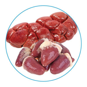 Raw organs for dogs